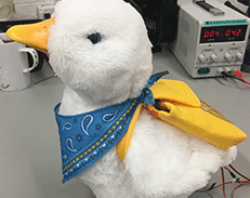 opens large image of toy duck with bandanna