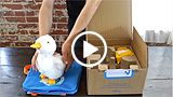 Unboxing your duck